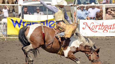 Rodeo: 8 Sekunden fest im Sattel |