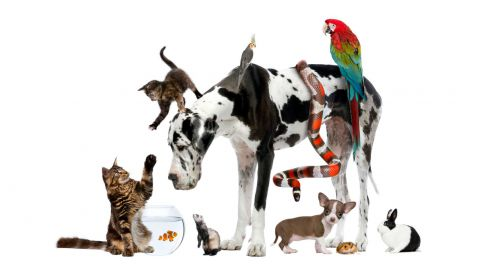 Cat Vs. Dog - Die Tiertherapie |